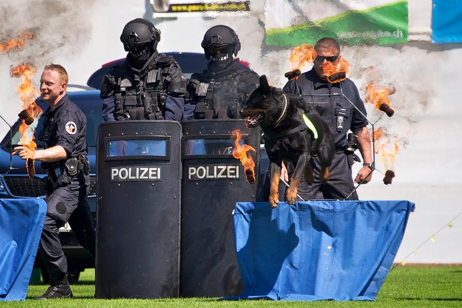 Цюрих: юбилей четвероногой полиции