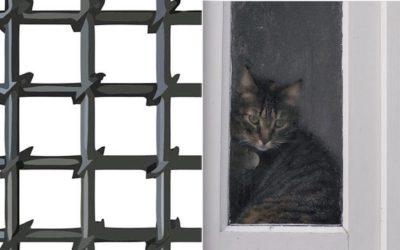 Александр Хургин. «Кошка в камере»