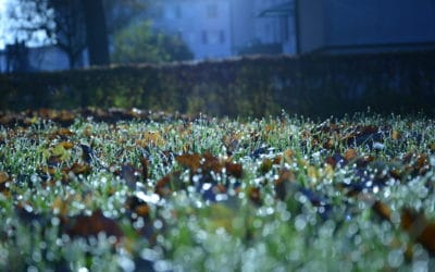 """Осень шила одеяло..."". (© schwingen.net)"