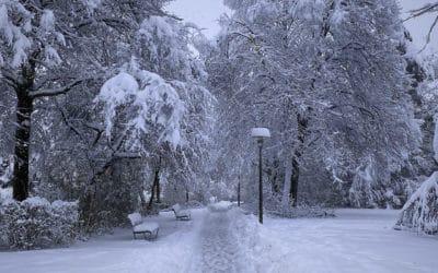Обильные снегопады в Цюрихе редки. 15 января 2021 г. (© schwingen.net)